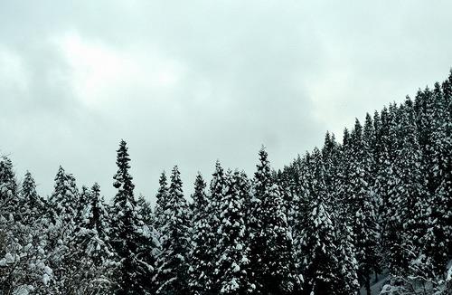 001雪の新潟.jpg